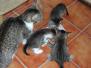 Dewey, Minki und ihre Geschwister